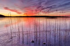Reflected Reeds (Peter Vestin) Tags: nikond7000 tokinaatxpro122840dx siruin3204x siruik30x adobecreativecloudphotography topazlabscompletecollection alstersstrandbad alster karlstad värmland sweden vänern nature landscape seascape sunrise ice winter