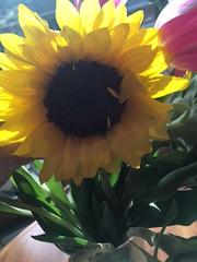 Sunflower Season (nadadjordjevich) Tags: valentinesday flowers sunflower beauty romance love age wisdom compassion old happiness spring season joyful