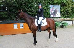 Doorn (Steenvoorde Leen - 1.5 ml views) Tags: horses horse jumping cross doorn pferde pferd reiten manege paard paarden springen 2015 utrechtseheuvelrug sgw dressuur arreche manegedentoom