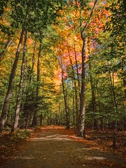 autumn path (-liyen-) Tags: autumn path forest woods woodland beauty nature outdoors ontario canada fujixt1 challengeyouwinner