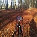 Herbstwaldspaziergang (14a)