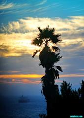 SeptemberTwentyFifth2015 (mcshots) Tags: ocean california sunset sea sky usa water clouds palms coast ship stock socal mooring delivery mcshots southbay chevron refinery tanker afloat oiltanker losangelescounty crudeoil