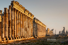 Apamea, Syria (Nick Brundle - Photography) Tags: apamea column ruin syria gettyimages unescoworldheritagesite romanruins roman ancient syriancivilwar middleeast getty