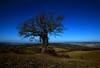 quercia!!! (Enzo Ghignoni) Tags: cielo panorama quercia terra toscana italia