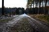 21.12.16 (Scheuer Photography) Tags: sunset trees procházka walk forest road winter sun newphotographer photo czechphoto czech liberecky kraj sever