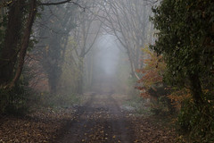 Out of Sight (Ged Slaughter Photography) Tags: outofsight fog foggy misty mist path pathway gedslaughter landscape trees colours autumnal