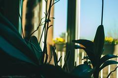 La main verte (Adeline Morel Photographie) Tags: plantes orchidées main verte nature intérieur