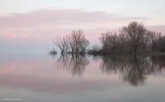 Mirror (Massimo_Discepoli) Tags: lake reflections symmetry trees water sunset trasimeno italy landscape