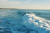 (aclaudine) Tags: 35mm film colors sea water nature naturallight surfer beach sky costadacaparica portugal lomo 800 canon wave ocean coast
