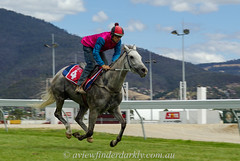 Galloping Grey (Cardesson) Tags: justpentax horses thoroughbred pentaxk10d