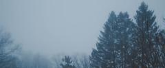 foggy forest (aronbaker2) Tags: foggy treeline foggytreeline treesinfog