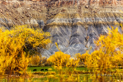 Autumn near Capitol Reef NP (Just Used Pixels) Tags: torrey utah unitedstates us gold autumn fall farms cattle cows