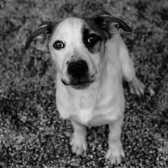 Thing131Dec1600035-Edit.jpg (fredstrobel) Tags: dogs pawsatanta phototype atlanta blackandwhite usa animals ga pets places pawsdogs