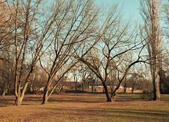 Liget (zsolesz_93) Tags: park liger budapest fa tree winter hungary nikon nikond3200 nikkor1855mm 22mm