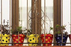 Dots and Pots (suzanne~) Tags: spain andalusia conildelafrontera window pot flower outdoor