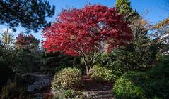 Photo of Japanese Garden, Calderstones Park, Liverpool(2)
