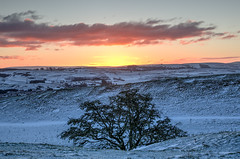 lonely tree (poach01) Tags: trees sunset sunrise wintery winter cold frostyfields frost picturesque hawick scotland scottishborders