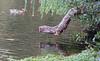 UK 2016 729 (Visualística) Tags: uk unitedkingdom reinounido gb granbretaña greatbritain england inglaterra ciudad city stadt urbano urban parque park london londres londra