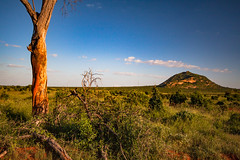 Panorama of the Tsavo East National Park in Africa (http://shutterstock.com/g/vcarlotta) Tags: outdoor adventure viewfinder park national travel animals adventurer kenya light africa people sun walk clouds crossing misty african blue panorama mountain savannah tourists sky car background wild nature jeep masai eastern mara road safari landscape wildlife blueskysun blueskyclouds redearth lightblue tsavoeast amboseli