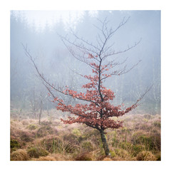 The Curtsy (Dylan Nardini) Tags: trees january 2017 nikon winter dreek nature mist curtsy leaves fog elegant d810 scotland clouds