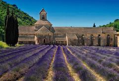 Summer (Don César) Tags: france europe francia europa provence convento lavanda lavender fields campos purple classic sénanqueabbey gordes vaucluse abbayenotredamedesénanque abbayedesénanque verano