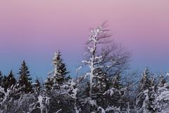 United colors of winter (Fabien Husslein) Tags: champ du feu alsace france sunset coucher soleil couleur colour trees arbres winter hiver snow neige landscape paysage vosges