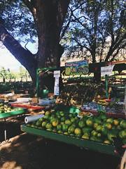 #authentichawaii #fruit #fruitstand #lemons (lilysmith7) Tags: authentichawaii fruit fruitstand lemons