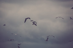 Seagulls (Erin Cadigan Photography) Tags: bird gull sea seagull ocean eerie