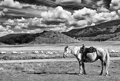 A horse with no name (Mario Ottaviani Photography) Tags: sony sonyalpha italy italia paesaggio landscape travel adventure nature scenic exploration view vista breathtaking tranquil tranquility serene serenity calm marioottaviani horse name journey desert mountains clouds cloudscape blackwhite blackandwhite biancoenero monocromatico monochrome monocromo black white cavallo abruzzo campoimperatore america