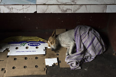 Covered (Photosightfaces) Tags: dog colombo sri lanka lankan streetdog kindness sleeping