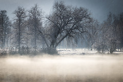 Morning at the lake (nils_P) Tags: water lake morning fog mist light trees winter frosty could snow