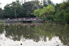 DSC_1567 (ppeng@yahoo) Tags: d810 nikon 50mm 50mmf14d taipei 植物園