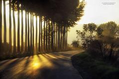ascoltando il sole (swaily ◘ Claudio Parente) Tags: sunset tree nikon abruzzo swaily claudioparente fucino