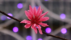 2017 HK Flower shown (johnjnjj) Tags: 2017 amazing asia capture canon marco lady camera plant place share beautiful natural great award square dof good bird world hongkong hot hit ih shown light youth group girl green gh prefect pretty people pov top cool focus nick nice insect fujifilm n