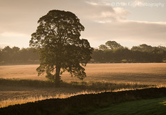 A Tree (.Brian Kerr Photography.) Tags: light tree cumbria edenvalley landscapephotography mistymorning briankerrphotography sonyuk a7rii