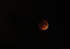 Super Moon Lunar Eclipse (Wils 888) Tags: usa moon eclipse newjersey blood nj super luna september 25 lunar bloodmoon 2015 supermoon