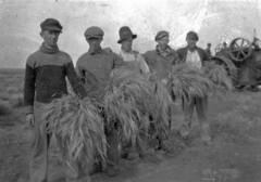 Ukrainians Harvesting in Separator, Saskatchewan (Provincial Archives of Alberta) Tags: thanksgiving farming harvest farms saskatchewan agriculture harvesting