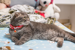 Red Collar () Tags: cat
