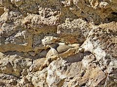 Rock Wren, Gingko Petrified Forest State Park, WA 10/20/15 (LJHankandKaren) Tags: wren rockwren gingkopetrifiedforeststatepark
