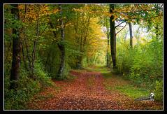 """En sous bois automne """"2015"""" (Christian Labeaune) Tags: france automne paysages 2015 sousbois bourgognectedor chatillonsurseine21400 christianlabeaune"""