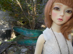 A fun photoshoot with my Elfdoll Sooah bjd showing off some of our Wyrmcraft Wearable Wings in Dragonfly, Peacock color, in the waning Autumn light...  Check us out on FB (WyrmcraftSilks) to see what's available for order now! (Cane's Folly SL) Tags: dragonfly dragons fantasy fairies damselfly lb lizards beardies beardeddragon faeries reptiles fae fairywings dragonflywings petcostume elfdoll dragonwings insectwings sooah dollwings fantasywings petwings bjdwings wyrmcraft damselfflywings