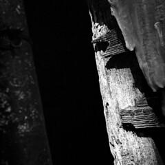 Noir (Coerulus) Tags: bw 6x6 tlr film mediumformat blackwhite squareformat vintagecamera ilfordxp2 ei400 1950 rolleiflexautomat6x6 3575mmtessartwinslensreflex rolleiflexmxmodel1