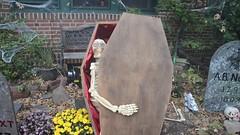 A Skeleton Tries To Escape (Joe Shlabotnik) Tags: halloween skeleton video lily trickortreat decoration violet coffin everett sarahp 2015 bliksem nikond7000 october2015