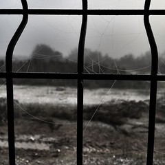 #prison #autumn #winter #fog #foggy #spider #nets #dark #broken #prisoner #nature #cold #coldweather #morning #turkey #türkiye