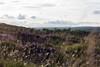 Welsh nature (Melvinia_) Tags: uk nature southwales wales canon landscape 50mm soft unitedkingdom bokeh britain heather breconbeacons paysage sunsetlight deserted penyfan paysdegalles bruyère canoneos450d digitalrebelxsi