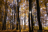 Twin trees - Autumn at Entenberg (Bernhard_Thum) Tags: wood autumn franken nationalgeographic carlzeiss thum leicam elitephotography landscapesdreams alemdagqualityonlyclub capturenature distagont1435 entenberg bernhardthum distagon3514zm