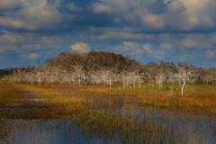 Big Cypress National Preserve, Florida, USA (4) (Jos Buurmans) Tags: bigcypressnationalpreserve everglades fl florida landscape nature northamerica southeast swamp swampland us usa unitedstates unitedstatesofamerica wetland ochopee
