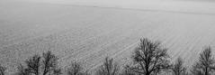 Tops (ParadoX_Design) Tags: treetops trees field plowed winter snow scene cold landscape blackandwhite holland wag wageningen rhenen arnhem landschap netherlands