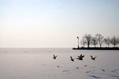 welcome to the north (tamasmatusik) Tags: mallard frozen frost winter blank landscape révfülöp balaton tél white ice snow birds sonynex sony nex3n milc sigma sigmalens 30mm pier welovebalaton january nature vadkacsa north northshore cold plattensee lake
