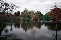 """Parque urbano """"Parc de la Ciutadella"""". Barcelona. 19-12-2016. (Usitu) Tags: parcdelaciutadella barcelona filtro densidadneutra"""